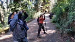 Spotting birds and Malabar Squirrels in Bombay Shola